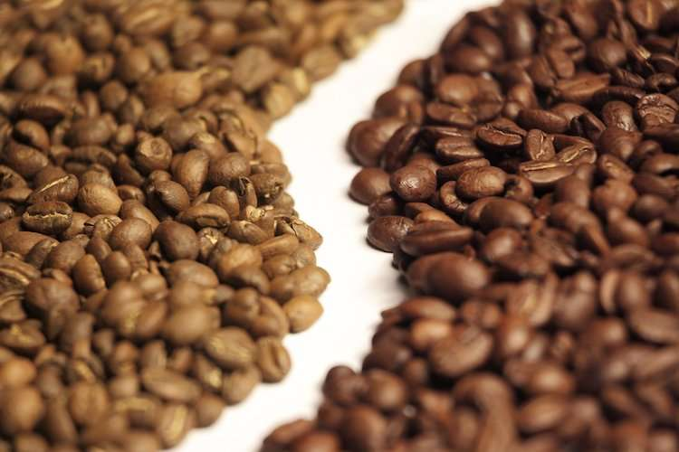 Arabica or Robusta Coffee Beans