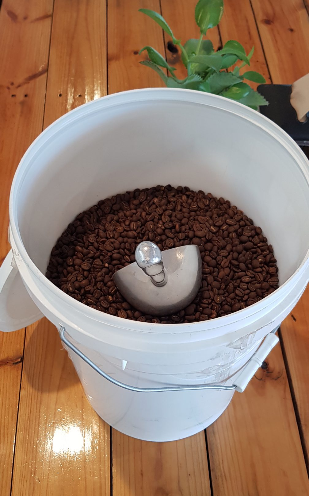 Pick up only – 8 Kg Bucket of Coffee Beans – Delivery not available